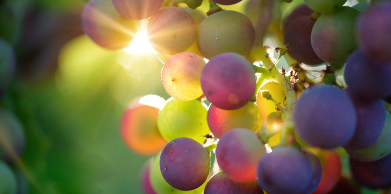 grapes 3550733 1920 pixabay