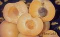 apricotfloragold3.jpg