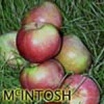 McIntosh_Apple___510712bd76bbf.jpg
