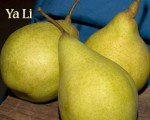 Ya_Li_Asian_Pear_4e63b9a708bac.jpg