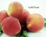 gold_dust