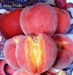 May_Pride_Peach__4f47fbc804049.jpg