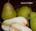 pearharrow_delight1.jpg