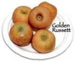 tn_GC7_golden_russet.jpg