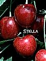 tn_stella.jpg
